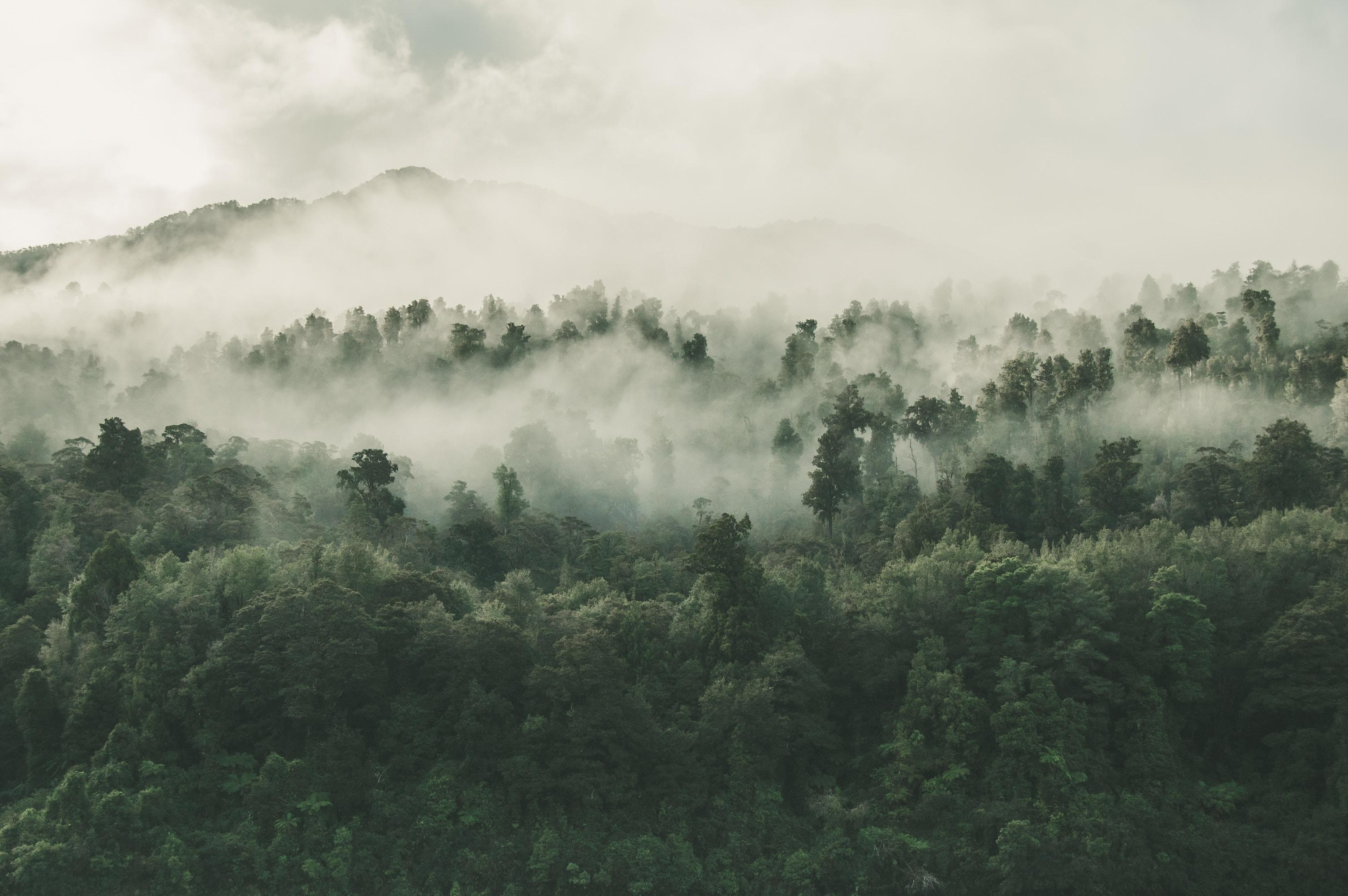 environment landscape